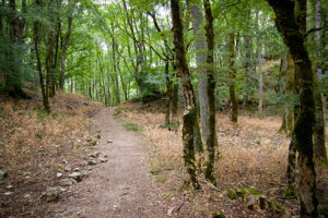 escursioni-monte-penna-castellazzara