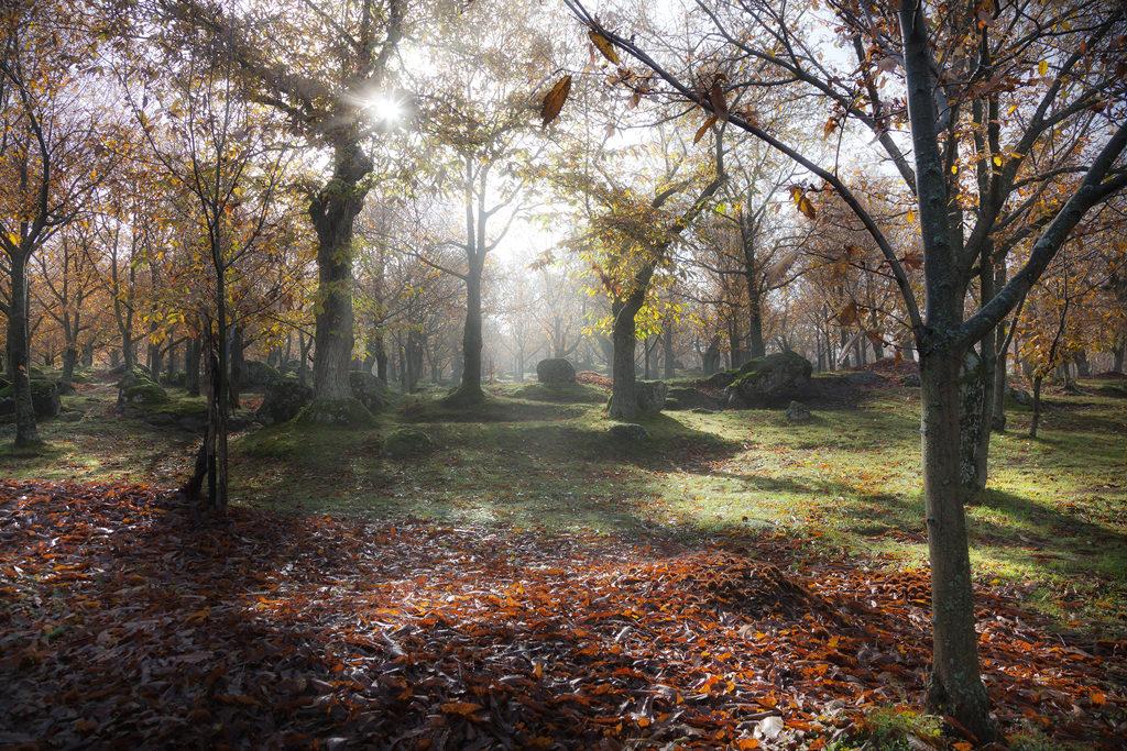 Bosco in autunno con un raggio di sole