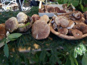 Funghi porcini appena raccolti
