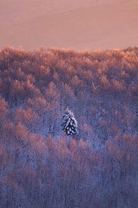 monte_amiata_inverno