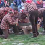 Due contrade si sfidano al taglio di un tronco di castagno