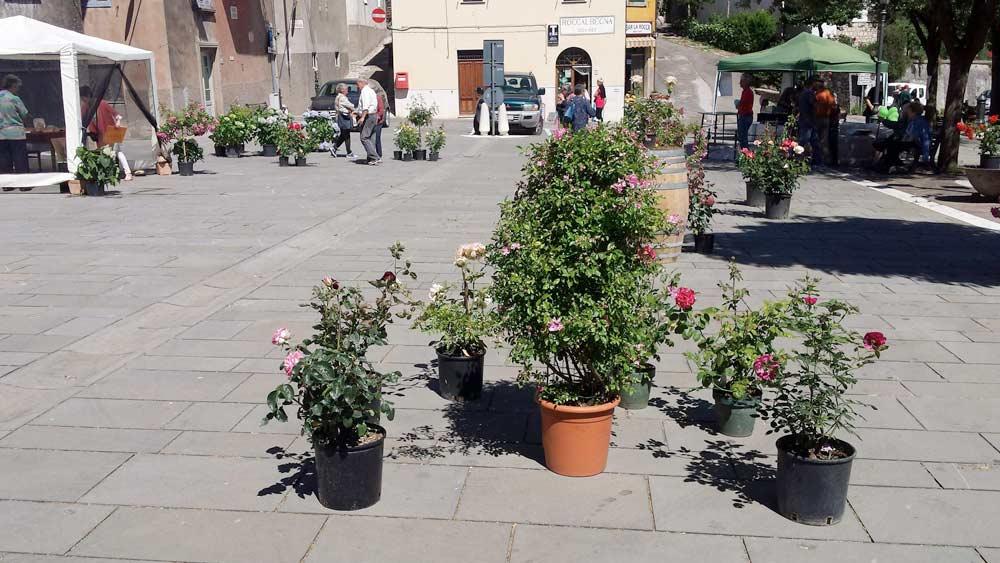 Rose in piazza durante la Festa della Rosa