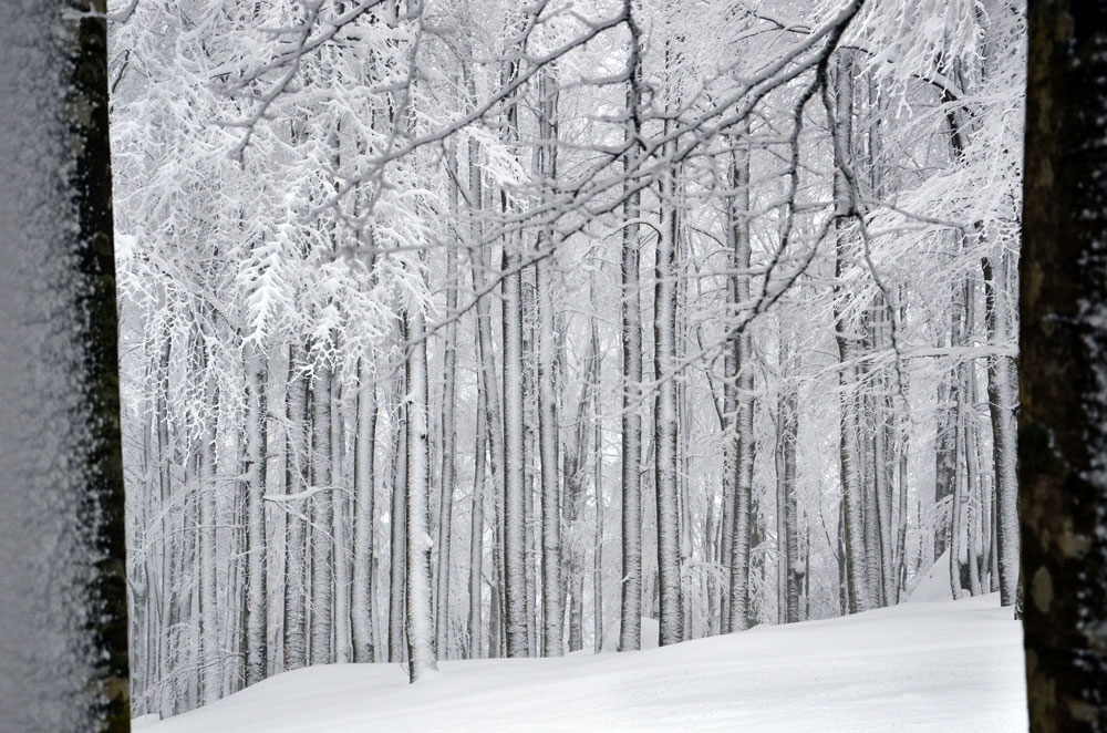 La faggeta amiatina coperta di neve