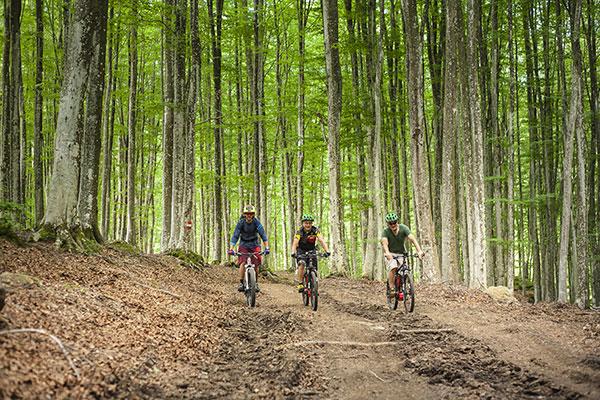Tre ciclisti che pedalano nel bosco
