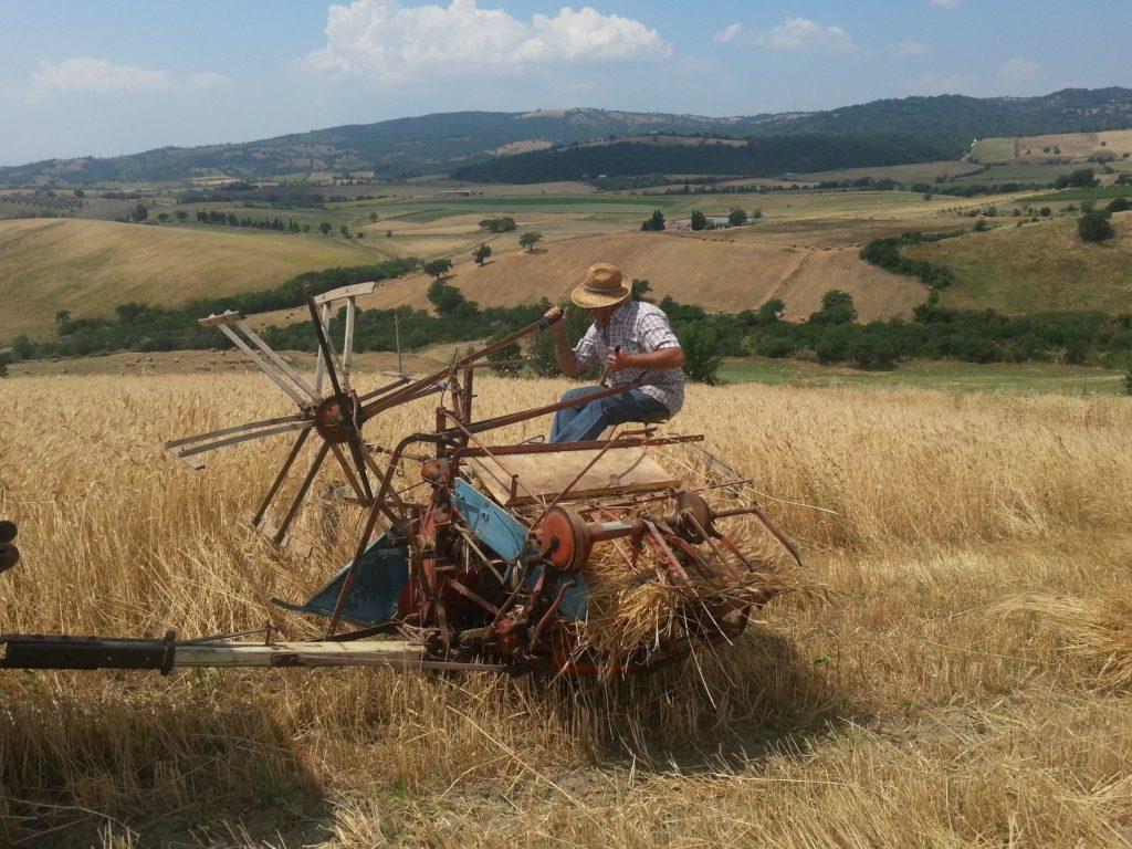 Un uomo seduto su un mezzo agricolo