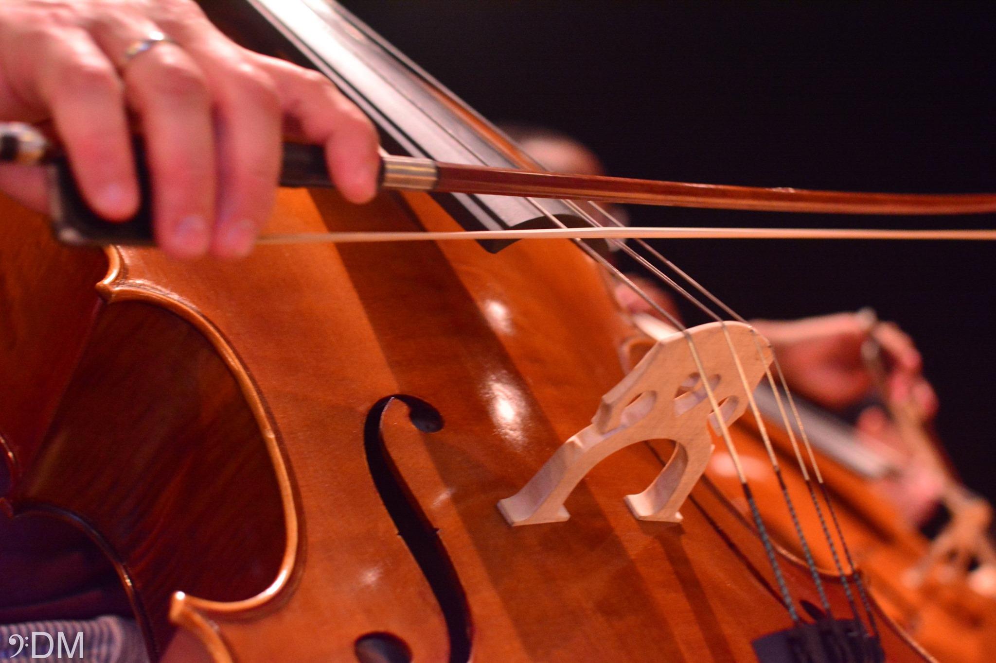 foto di uno strumento a corde